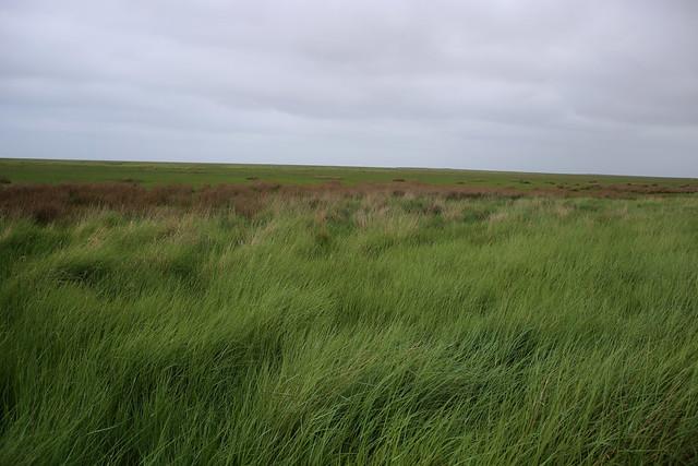 Marshes at Saltfleet