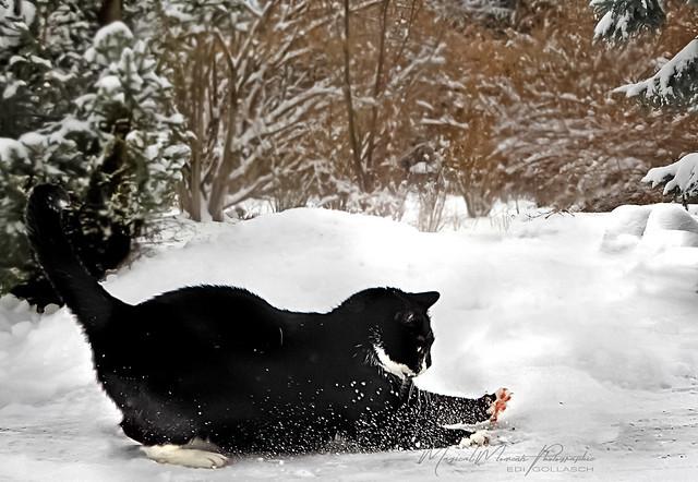 Juchuuu, Schnee ...