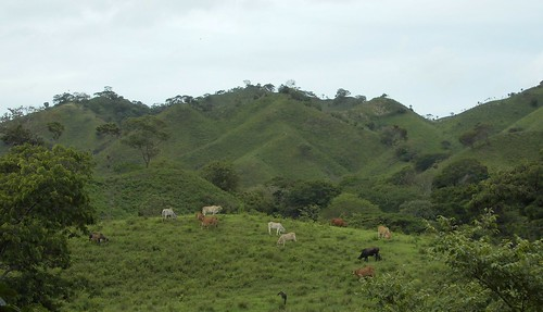 Nov/2018 - Cows grazing on the Nicaraguan hillsides (photo credit/ Dirk Hauke Landmann).