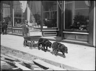 A delivery boy transports goods on his wagon drawn by two dogs / Garçon transportant des marchandises sur son chariot de livraison tiré par deux chiens