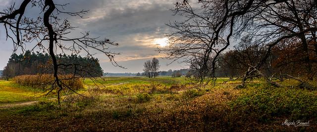 Rogalin Landscape Park