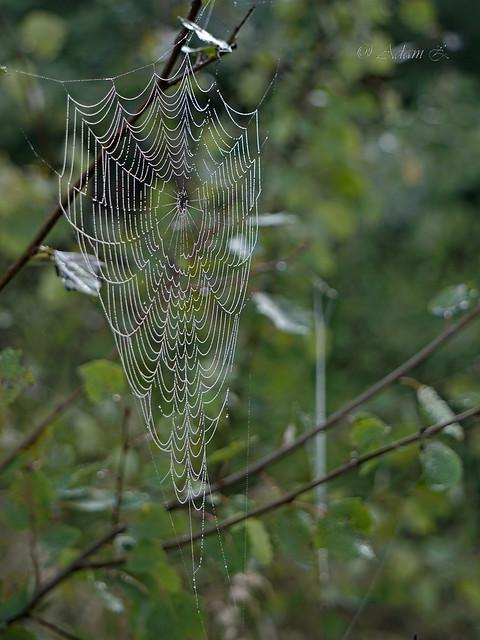 Pajęczyna / spider's web