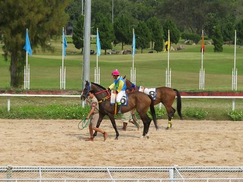 チェンマイ競馬場のパドックを歩く馬