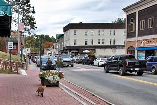 Lake Placid  New York - Main Street Commercial Area -- Wild Fox  Walking   by Onasill ~ Bill Badzo - - 64 Million Views - Thank