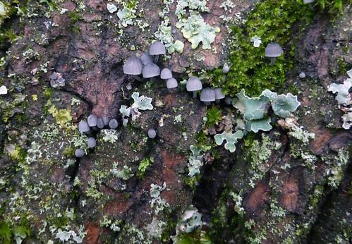 Miniaturer nature reserve | by Jazzbeat.