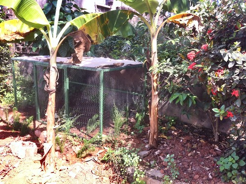 nigeria ibadan snailfarm