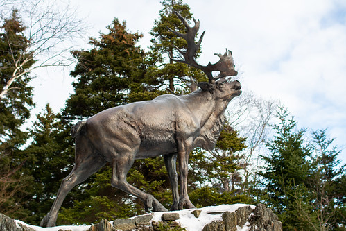 Winter on the Trail of the Caribou