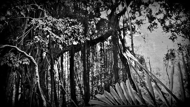 INDONESIEN, Bali , unterwegs in Ubud , im Affenwald , Banyanbäume, Affen und Skulpturen, 17929/11151
