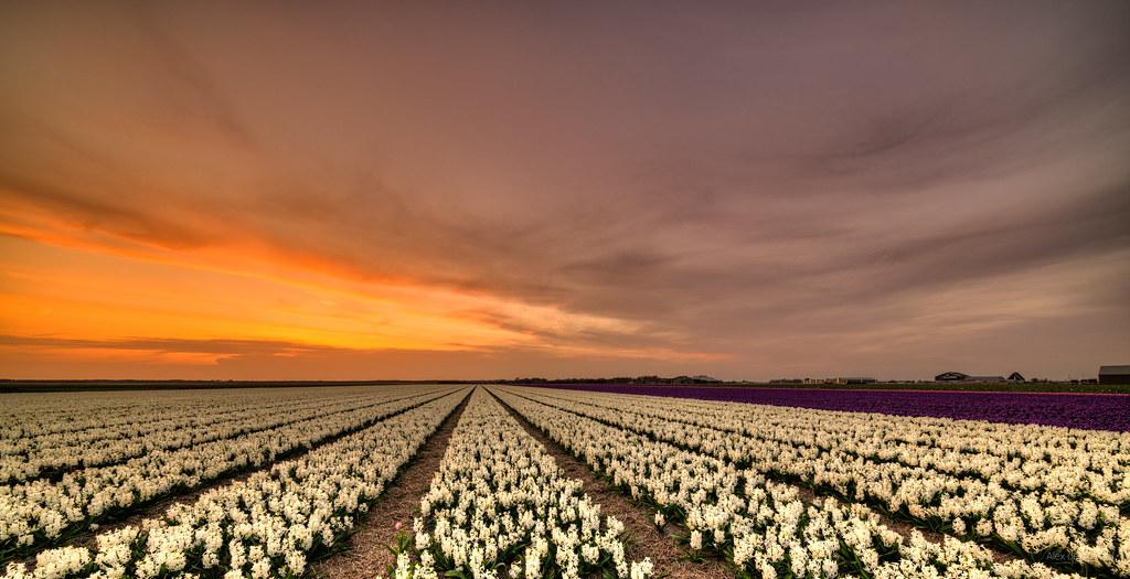 Flat flowery fields.