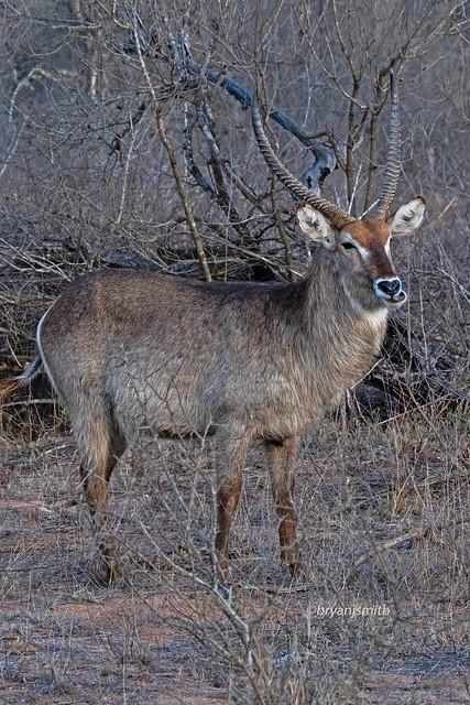 WATBUCK 1051 KrugerNP 102318