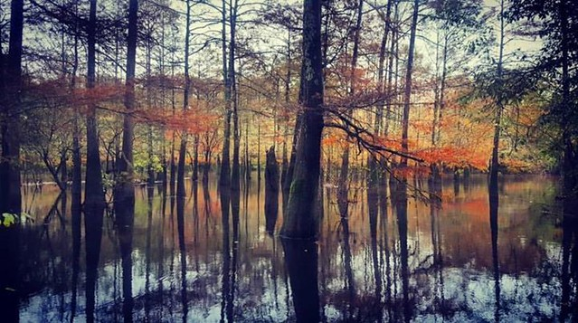 Fall color in The Big Thicket. Travel Tip- Big Thicket National Preserve in southeast Texas offers 40 miles of hiking trails, camping, canoeing, kayaking, and plentiful bird-watching. : @georgehutto