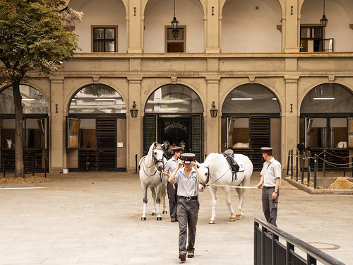 Spanish Riding School 2   by Son of Groucho