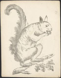 Squirrel with nut / Écureuil grignotant une noix