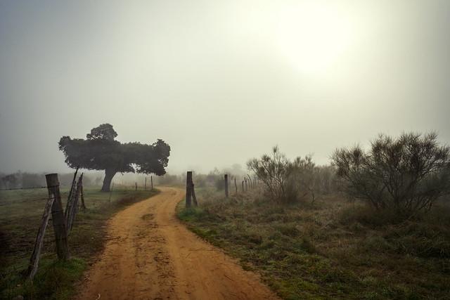 Path towards the fog