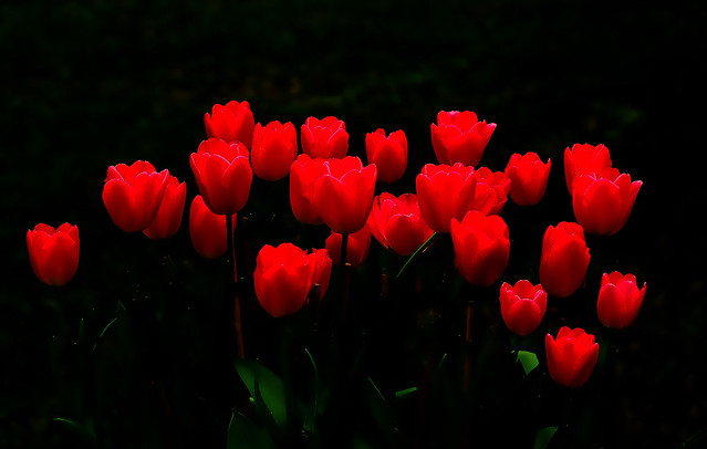 IMGP0160 Blooming in the Garden