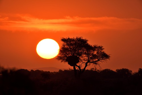 africa namibia sunset silhouettes tree sun