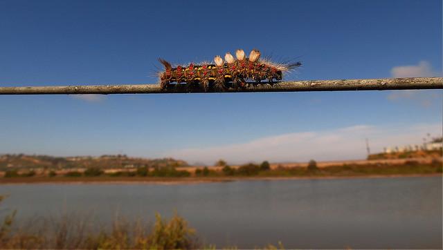 Caterpillar & Lagoon