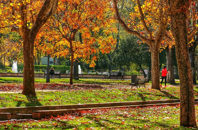 Autumn in Zaragoza, Spain