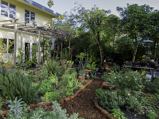 January Garden   by T. Christensen