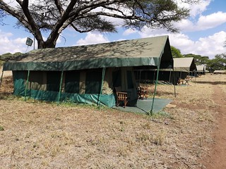 Africa Safari Serengeti Central tents | by Paradise & Wilderness