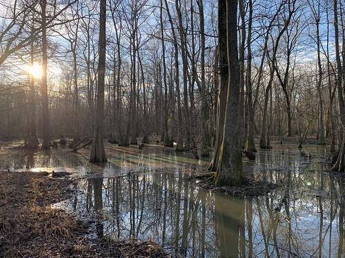 reflections reflectionsinwater wetlands hiking sunset trees hikingthroughtheforest