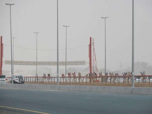 Al Marmoom Camel Racing Track - 3