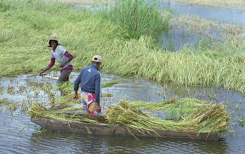 Boatload of Rice | by TAZMPictures