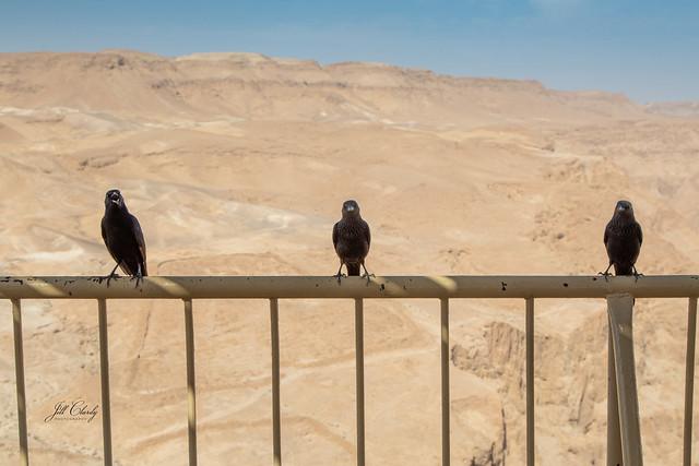The Choir at Masada Ruins, Dead Sea, Israel