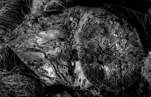 "stump ""IR"" 