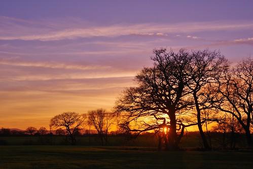 sunset silhouette trees fields sky clouds light sun shine blue colours