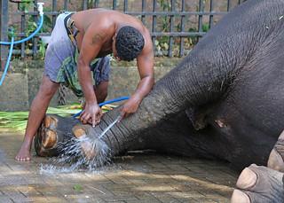 Elephant Foot Wash (1X7A4590b)