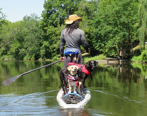 Photo of man on a paddleboard with two dogs