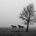 Two horses and a tree by marikoen