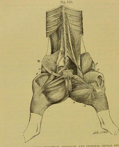 This image is taken from The comparative anatomy of the do ...