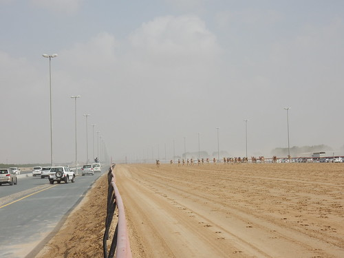 Al Marmoom Camel Racing Track - 10