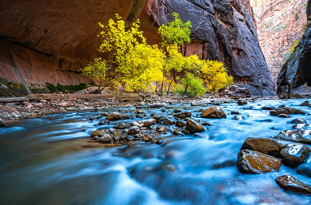 Zion Narrows Hike! Zion National Park Fall Foliage Utah Autumn Colors Fine Art Landscape & Nature Photography! Sony A7R III & Sony FE 16-35mm f/2.8 GM G Master Lens! Super Sharp High Res Photography! Elliot McGucken Art! Maples, Cottonwoods & Red Rock!