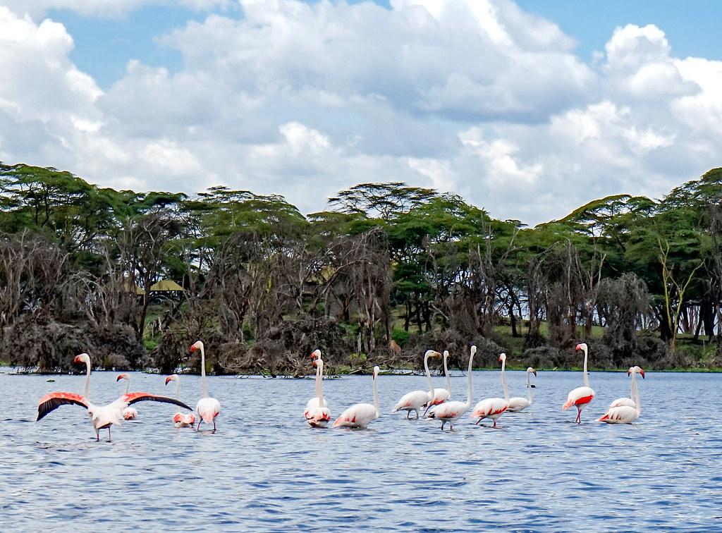السياحة في كينيا- أهم المزارات السياحية