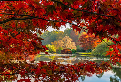 wealdendistrict england unitedkingdom gb acer water colourful autumncolours outside nature naturaleza natural trees red blue green landscape lake garden anthonywhitesphotography ilce7rm2