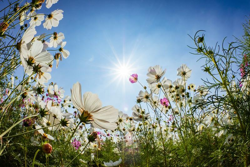 玉山花海|Flowers