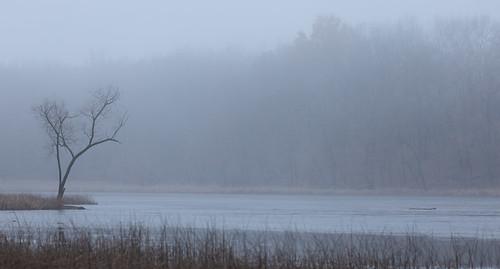 asylumlakepreserve kalamazoocounty michigan us unitedstates fall fog kalamazoo landscape outdoor overcast park winter tree explored