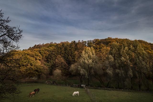 autumnal landscape with horses
