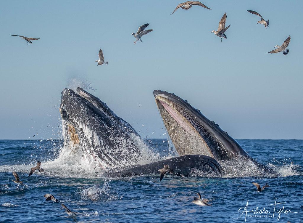 鯨魚與海鳥