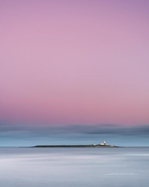 Coquet Island Pink