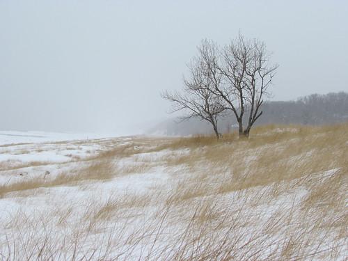 winter lake lakeshore lakemichigan beach beachgrass tree wind ice