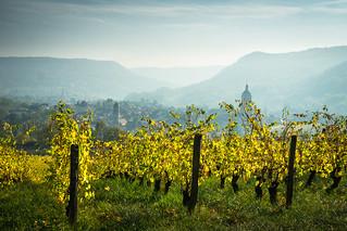 Au pays du vin jaune...