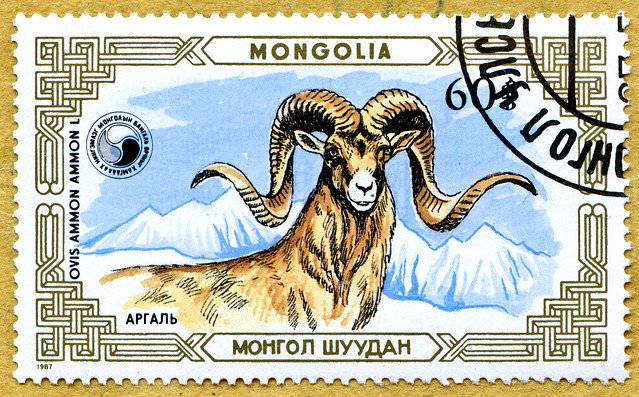 great stamp Mongolia Монгол Улс 60M mountain sheep, Ovis ammon (Argali, Riesenwildschaf, Wildschaf, argali juh, Арха́р, го́рный бара́н, 盘羊,   ) sello francobolli poste timbre Mongolie 蒙古 邮票  почто́вая ма́рка Монго́лия 60M