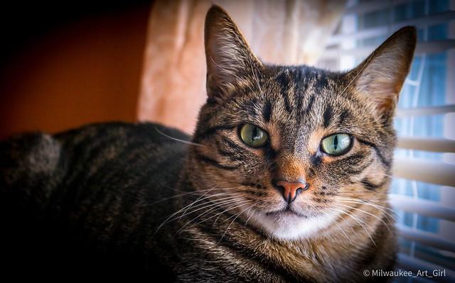 Jasper - America's Next Top Cat Model