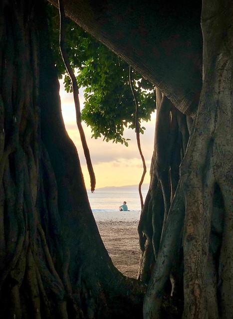 Through the banyan tree