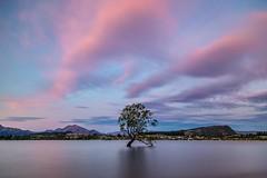 The Wanaka Tree-14