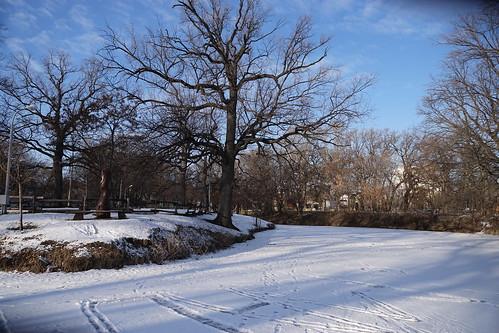 oak on guard   by sorrento_photo